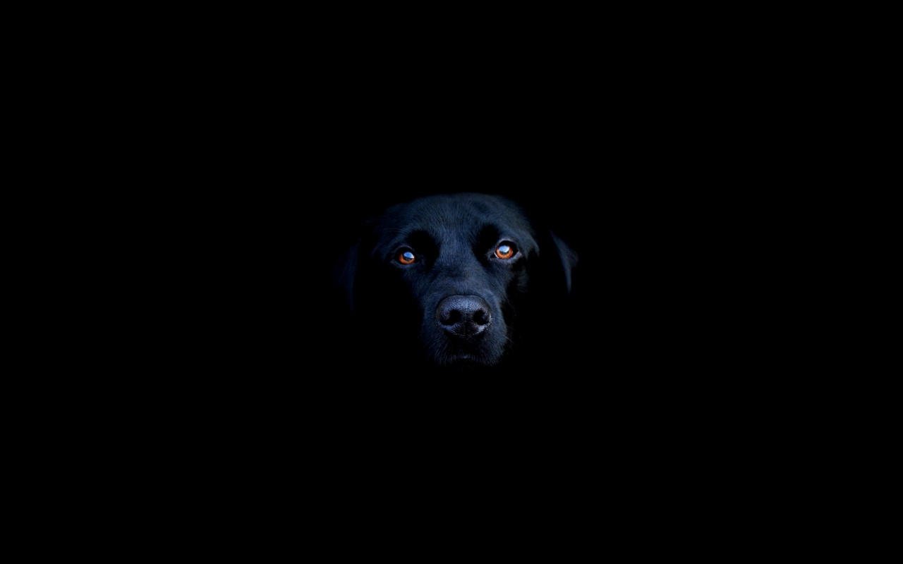 Black Dog's Bedside Manner